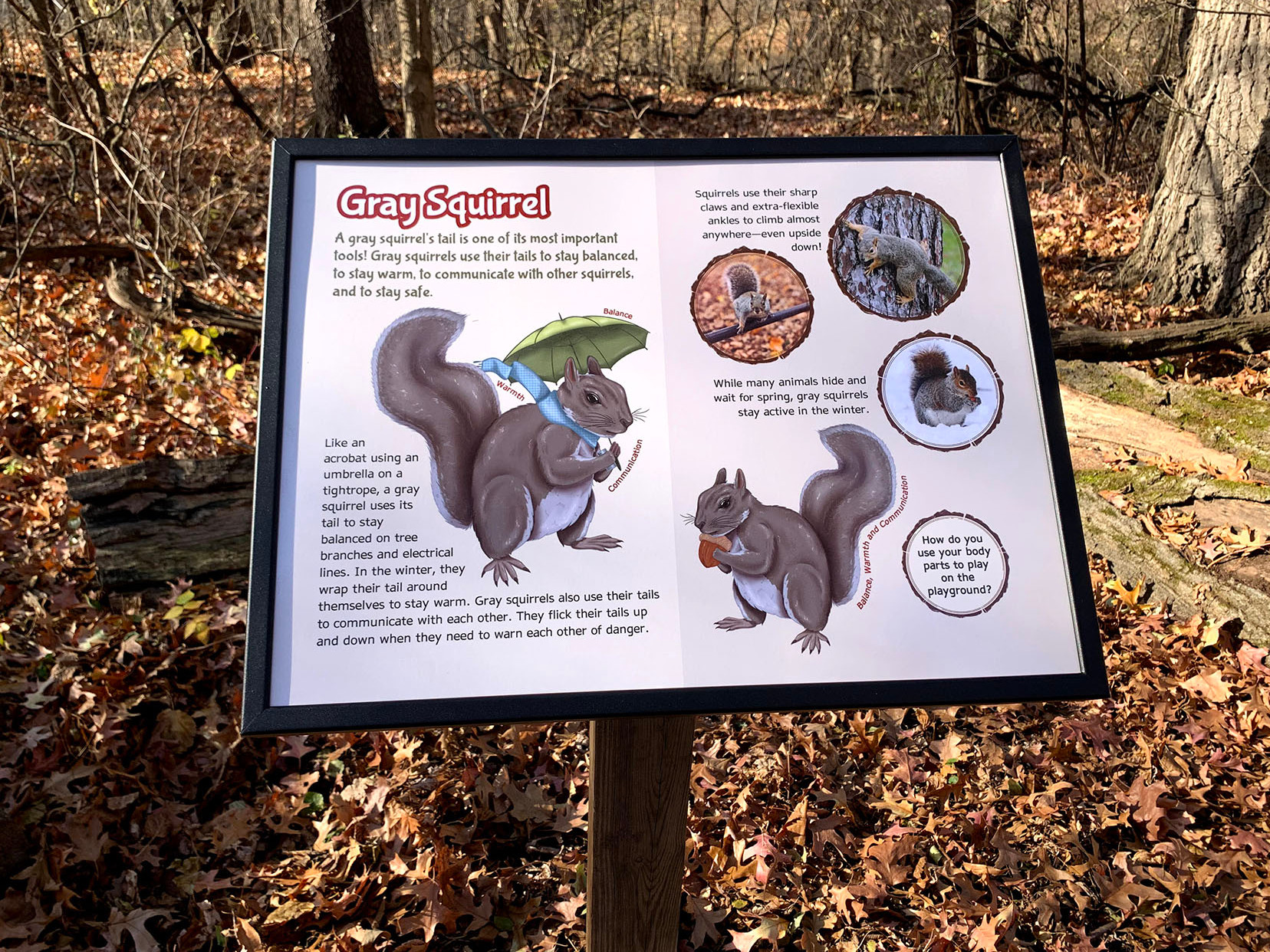 An interpretive sign in the woods depicting a gray squirrel in a fun cartoon style.