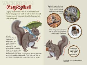 Gray Squirrel Outdoor Education Sign