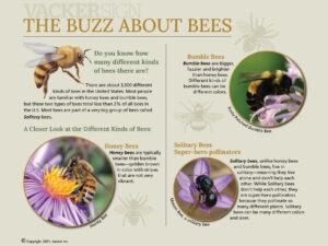 Standard Buzz About Bees Interpretive Sign