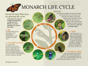 Monarch Life Cycle Interpretive Sign